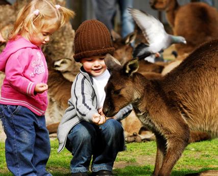 images ballarat wildlife - photo #21