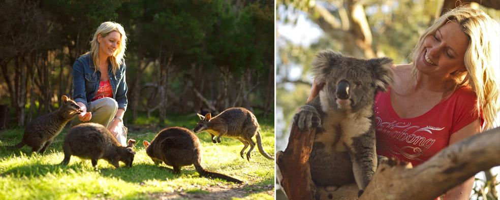 Ballarat Wildlife Park Accommodation