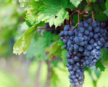 Mount Beckworth Wines