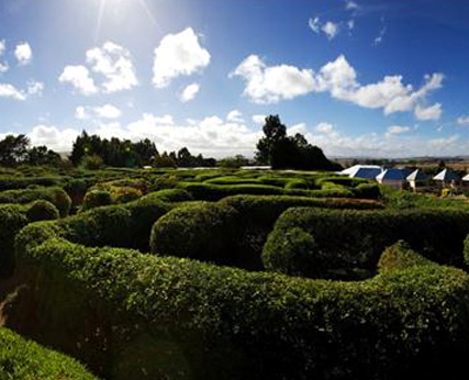 Tangled Maze